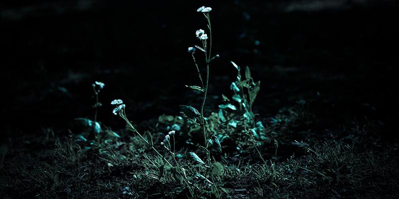 暗闇の一輪の花